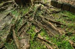 Tree roots , Green. Soil stock photos
