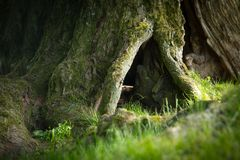 Tree roots and green grass. Closeup Stock Photo