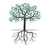 Tree roots vector illustration