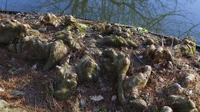 Tree roots grow in a small lake upwards, elves Droll home. Tree roots grow in a small lake upwards, elves and Droll home royalty free stock photography