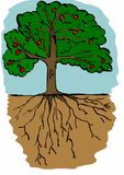 Tree and roots Royalty Free Stock Photos