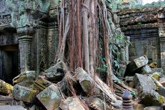 Tree roots jungle ancient Ta Prohm temple, Cambodia Stock Images