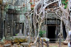 Picturesque tree roots jungle sculpture ancient Ta Prohm Angkor temple, Cambodia Stock Photos