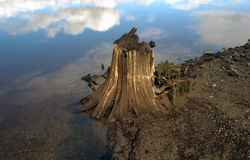 Tree roots on a lakeshore Stock Images