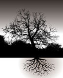 A Tree with Roots Landscape Stock Photo