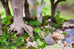 Tree roots and moss Royalty Free Stock Photography