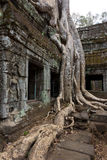 Tree roots over windows at Ta Prohm Stock Photos