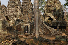 Tree roots overwhelm ancient temple wall Stock Image