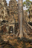 Tree roots overwhelm ancient temple wall Royalty Free Stock Photo