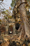 Tree roots overwhelm ancient temple wall Royalty Free Stock Photos