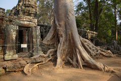 Tree roots overwhelm ancient temple wall Stock Photo
