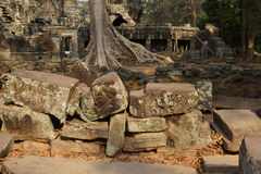 Tree roots overwhelm ancient temple wall Stock Photos