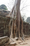 Tree roots overwhelm ancient temple Stock Photo