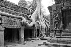 Tree roots overwhelm ancient temple Stock Image