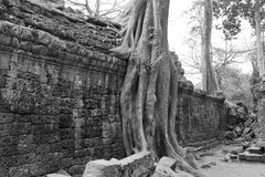 Tree roots overwhelm ancient temple Royalty Free Stock Photography