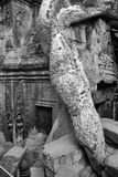 Tree roots overwhelm ancient temple Royalty Free Stock Photos
