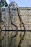 Tree roots in a pond Stock Photo