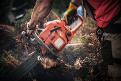 Tree Roots Removal. Using Gasoline Chainsaw. Worker with Power Tool Cutting Roots Elements. Dynamic Motion Blurs stock image