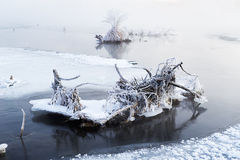 Tree roots in river Stock Images
