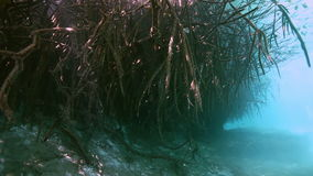 Tree roots and rocks in Yucatan Mexican cenote. stock video
