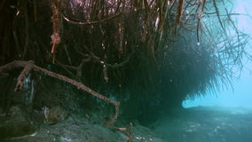Tree roots and rocks in Yucatan Mexican cenote. Tree roots and rocks in the bush landscape Mexican Sacred Mayan Cenote. Deep underground clean and clear fresh stock video footage