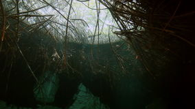 Tree roots and rocks in Yucatan Mexican cenote. stock video footage