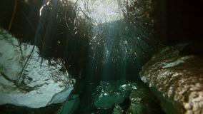 Tree roots and rocks in Yucatan Mexican cenote. stock footage
