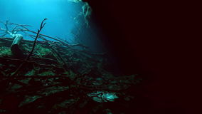 Tree roots and rocks in Yucatan Mexico cenote. Tree roots and rocks in the bush landscape Mexico Sacred Mayan Cenote. Deep underground clean and clear fresh stock video footage