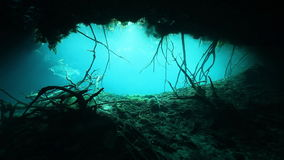Tree roots and rocks in Yucatan Mexico cenote. stock video