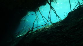 Tree roots and rocks in Yucatan Mexico cenote. Tree roots and rocks in the bush landscape Mexico Sacred Mayan Cenote. Deep underground clean and clear fresh stock video