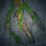 Tree Roots Stock Images