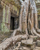 Tree roots in ruin Stock Photography