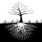 Tree roots silhouette royalty free illustration