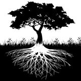 Tree roots silhouette. Illustration of silhouette tree with roots as a symbol of nature Royalty Free Stock Photography