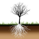 Tree roots silhouette. Illustration of tree with grass and plants on fertile land Stock Photography