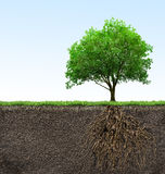 Tree with roots Royalty Free Stock Image