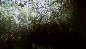Tree roots underwater in Yucatan Mexican cenote. stock video
