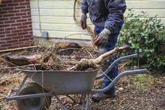 Tree roots in wheelbarrow Royalty Free Stock Photography