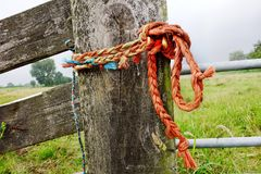 Tree, Rope, Grass, Wood Stock Photography