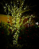 Tree, roses and Christmas lights. Tree decorated with Christmas lights Royalty Free Stock Photo