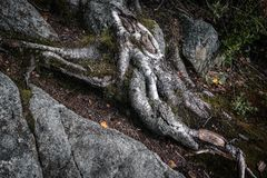 Tree rot close up in forest Royalty Free Stock Image