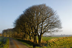 Tree row Stock Image