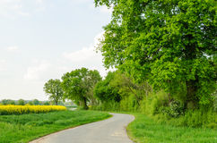 Tree row along a lane in marshes Royalty Free Stock Photos