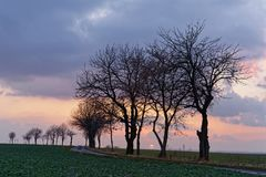 Tree row with distinctive cloud formation and sunset stock image