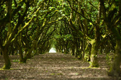 Tree row Royalty Free Stock Photography