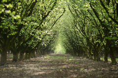 Tree row Stock Photography