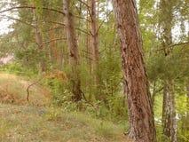 Tree row Royalty Free Stock Photo