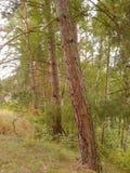 Tree row Stock Image