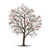 Tree rowan and berries without leaves Royalty Free Stock Photo