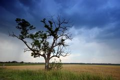 Tree in the rural Stock Photography